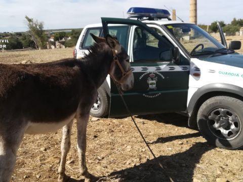 El SEPRONA investiga en Puente Genil a una persona como supuesta autora de un delito de maltrato animal