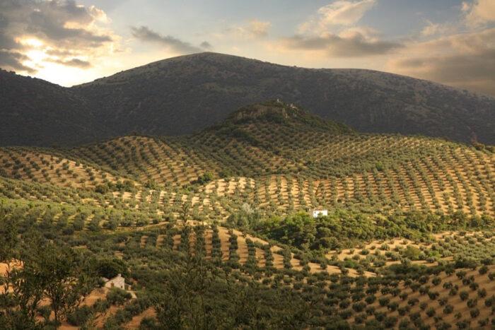 Tratamientos aéreos contra la plaga de la mosca del olivo