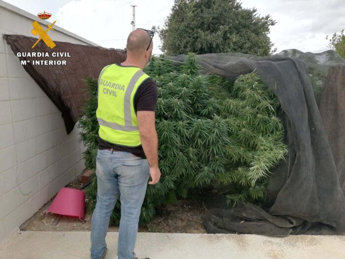 La Guardia Civil desmantela dos plantaciones de marihuana en La Carlota e investiga a dos personas