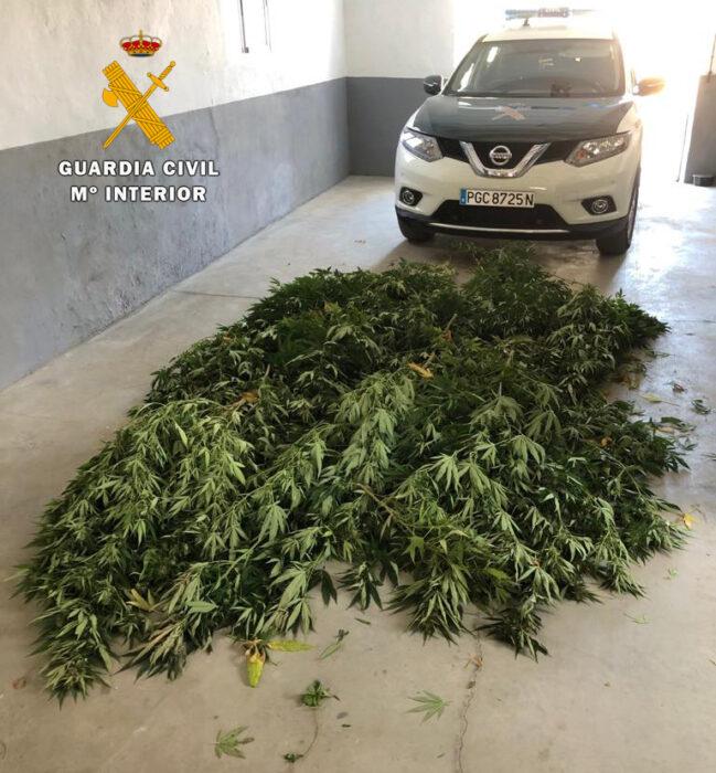 La Guardia Civil de Villaviciosa desmantela una plantación de marihuana en Espiel e investiga a una persona