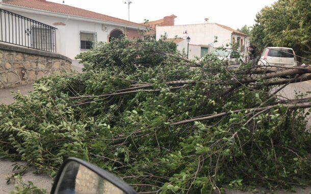 El fuerte viento provoca la caída de una rama de uno de los árboles del Paseo Alameda de Almedinilla