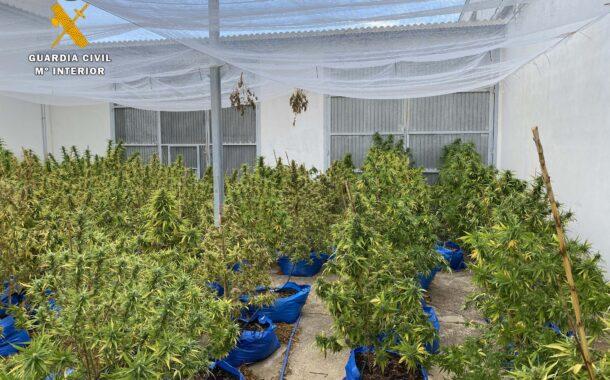 La Guardia Civil desmantela una plantación de marihuana en Encinas Reales y detiene a una persona