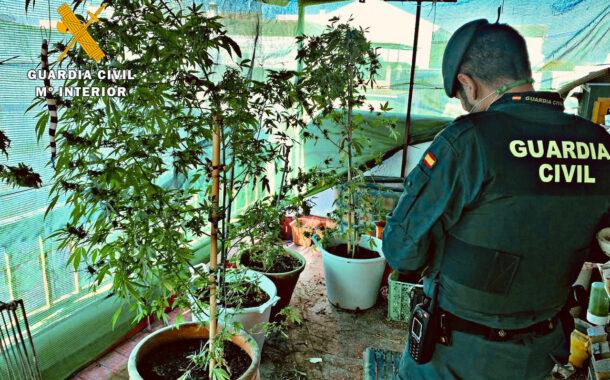 La Guardia Civil con la colaboración de la Policía local de Montalbán desmantela una plantación de marihuana e investiga a una persona por cultivo y elaboración de drogas