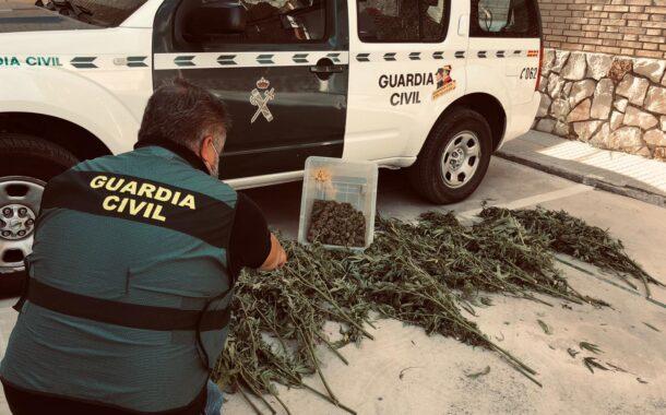La Guardia Civil desmantela una plantación de marihuana en Palenciana y detiene a una persona