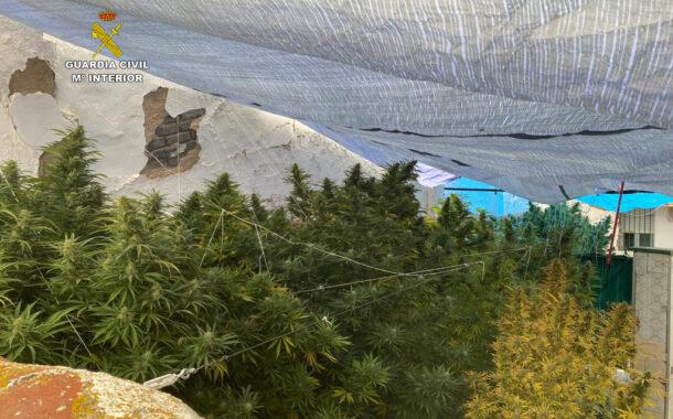 La Guardia Civil desmantela una plantación de marihuana en Peñarroya-Pueblonuevo e investiga a una persona por cultivo y elaboración de drogas