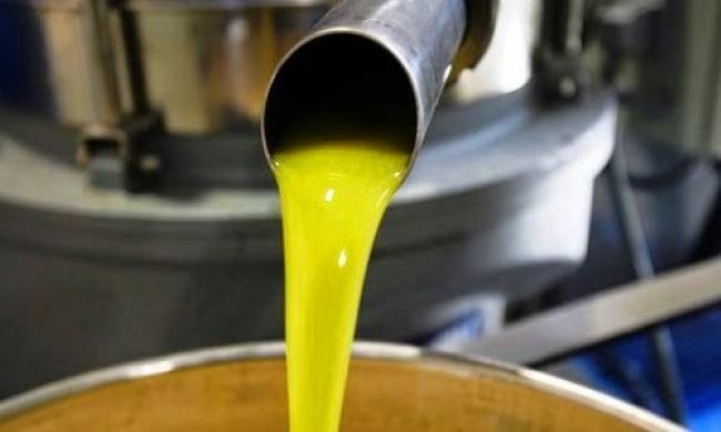Siete AOVEs producidos por empresas de la comarca de Priego premiados en el concurso internacional L'Olive D'Or de Canadá