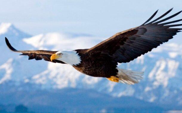 El águila y las gallinas