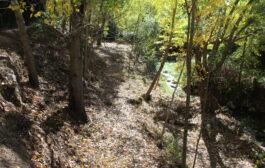 El Ayuntamiento de Almedinilla limpia el tramo urbano del río Caicena