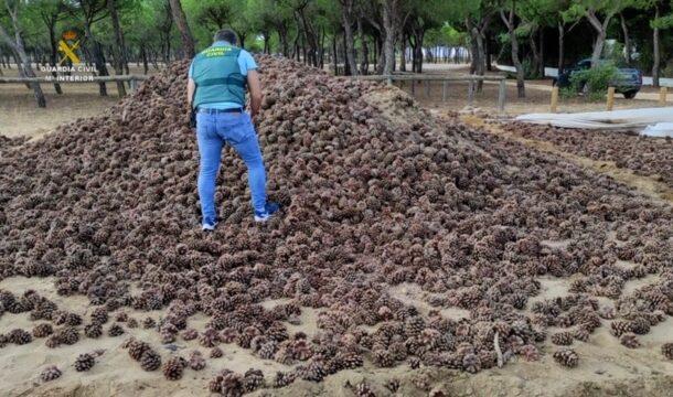 La Guardia Civil desarticula un grupo criminal dedicado al hurto de piñas que operaba en las provincias de Córdoba y Huelva
