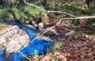El río Caicena se tiñe de azul tóxico
