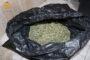 La Guardia Civil desmantela una plantación de marihuana en Palma del Río y detiene a una persona