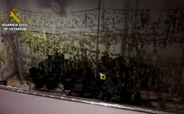 La Guardia Civil desmantela una plantación de marihuana en Puente Genil y detiene a una persona