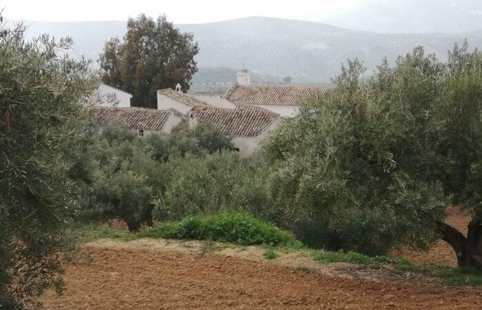 Aparecen restos de un asentamiento romano en Sileras
