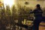 La Guardia Civil desmantela una plantación de marihuana en Posadas y detiene a cinco personas