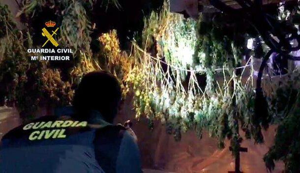 Cuatro personas detenidas y otras dos investigadas en Puente Genil por delitos relacionados con el cultivo de drogas