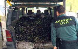 La Guardia Civil interviene en Adamuz más de 9 toneladas de aceituna e investiga a seis personas por apropiación indebida y falsedad documental