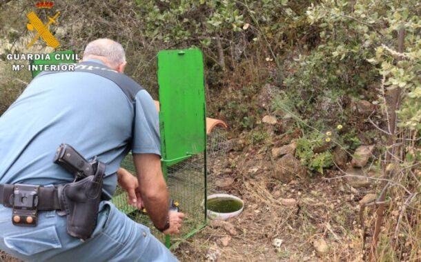 EL SEPRONA investiga a una persona en La Granjuela como supuesto autor de un delito contra la flora, la fauna y los animales domésticos