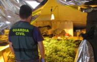 Guardia Civil desmantela una plantación de marihuana en Montilla y detiene a dos personas