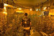 La Guardia Civil desmantela dos plantaciones de marihuana en Almodóvar del Río y detiene a dos personas