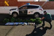 La Guardia Civil desmantela una plantación de marihuana en Fernán Núñez y detiene a una persona