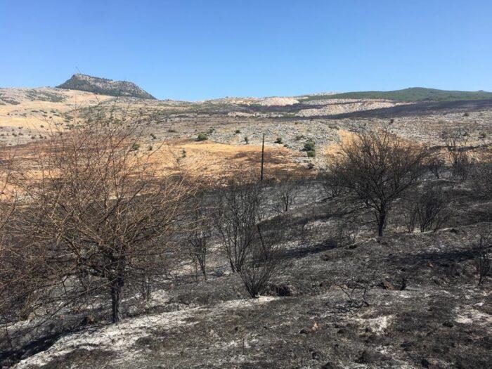 Cinco medios aéreos y más de 60 efectivos continúan trabajando para controlar el incendio forestal de Cabra