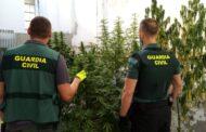 La Guardia Civil de Puente Genil desmantela varias plantaciones de marihuana que se ubicaban en los patios comunitarios de una de las barriadas de la localidad
