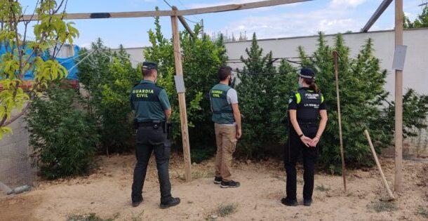 La Guardia Civil desmantela una plantación de marihuana en La Rambla e investiga a una persona por cultivo de droga